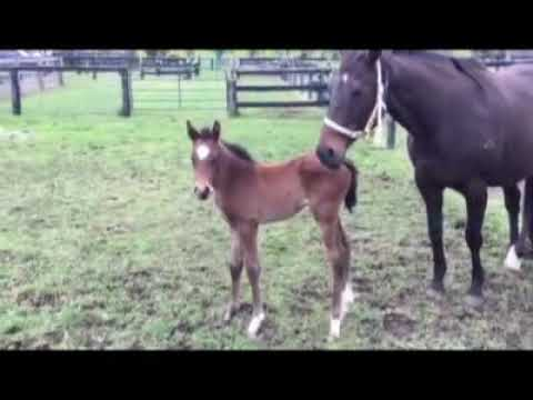 Victory Party & Animal Kingdom Foal